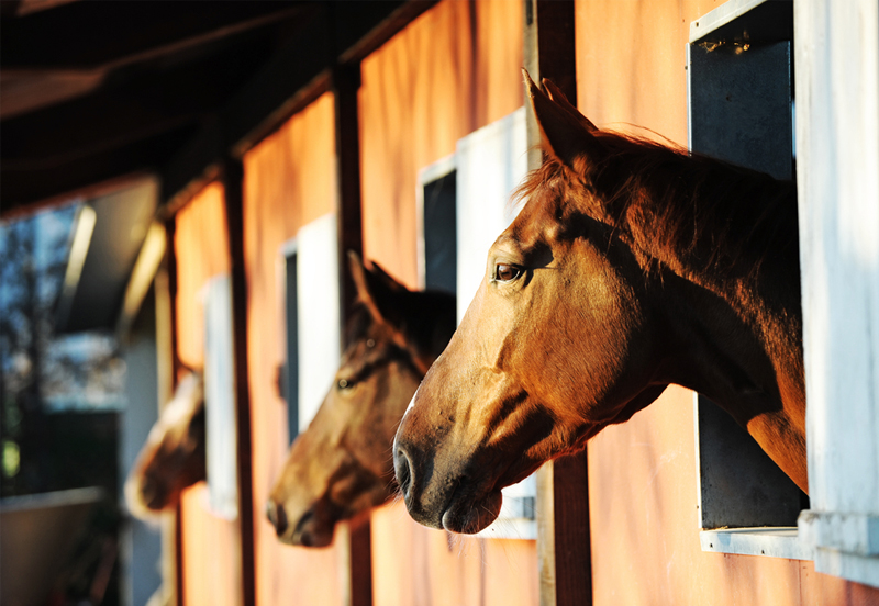 5 Reasons why you should buy from a horse dealer