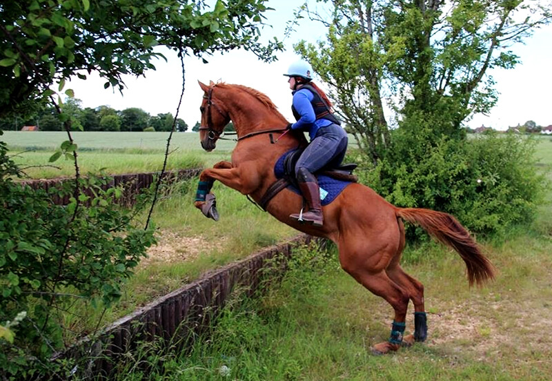 5 Tips for starting to retrain an ex-racehorse