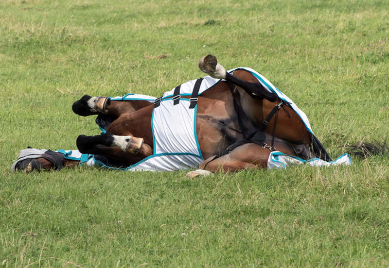 Hot buys for your horse this summer
