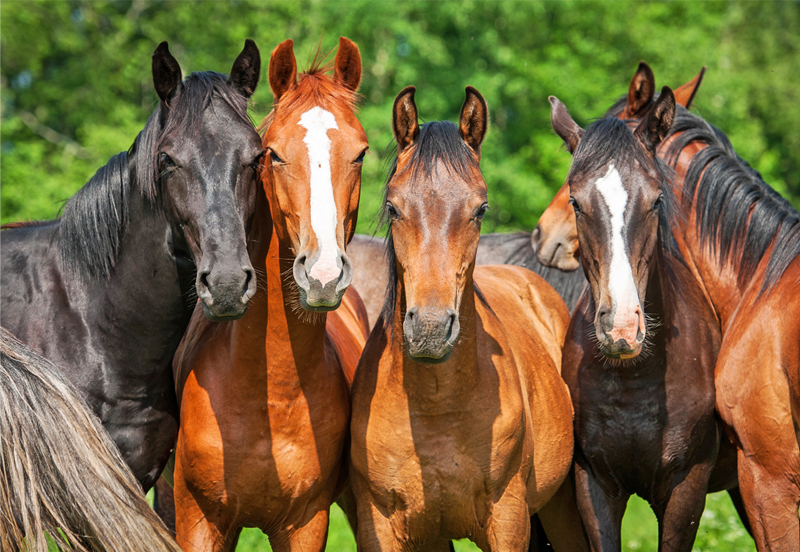 Three tips to find a reputable horse dealer